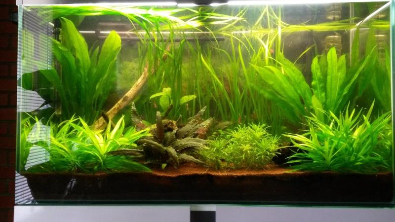 Mon premier aquarium - Page 2 20140510