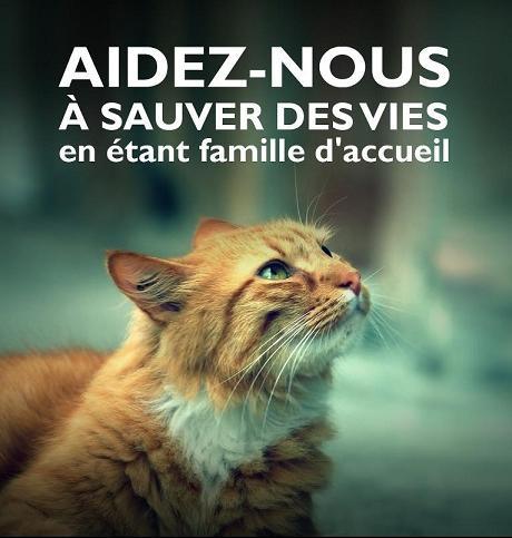 Besoins de Familles d'Accueils ! Famill11