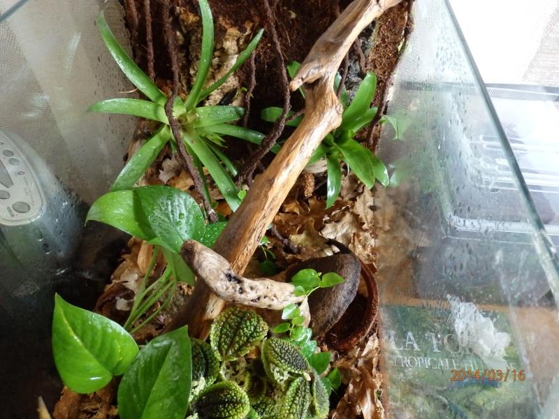 Aquaterrarium  P3160114