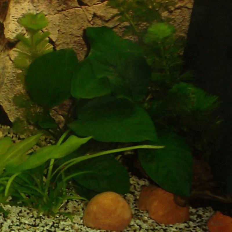Chriss Bac planté 120 litres  Annubi10