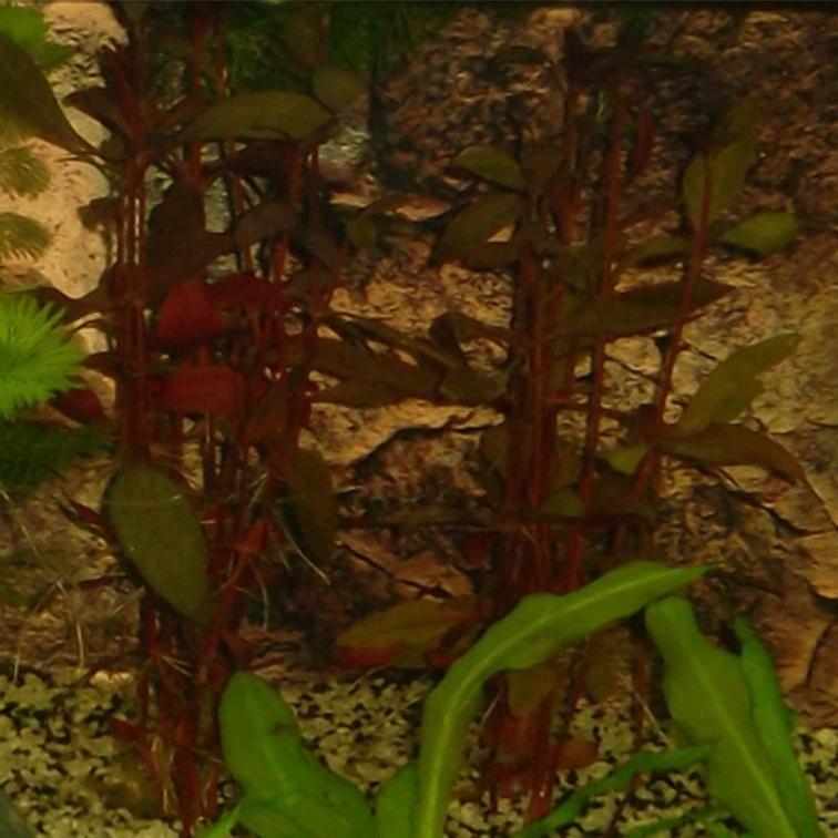 Chriss Bac planté 120 litres  Plante10