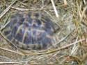 Identifier ma tortue SVP Dscn1114