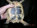 Identifier ma tortue SVP Dscn1117
