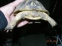 Ma tortue hiberne les yeux ouverts Dscn1120
