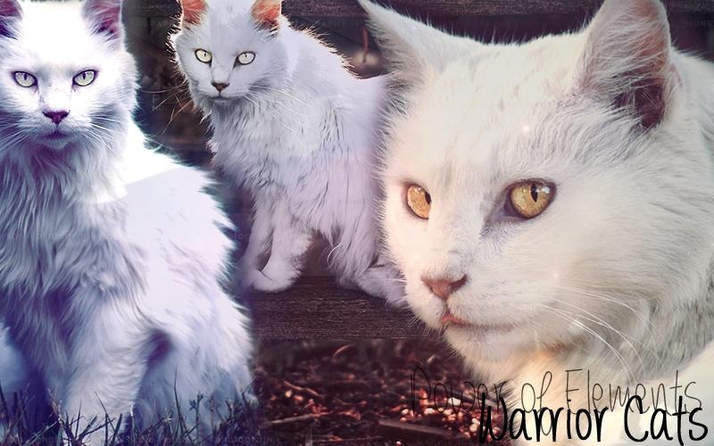 Warrior Cats, le Pouvoir des Eléments