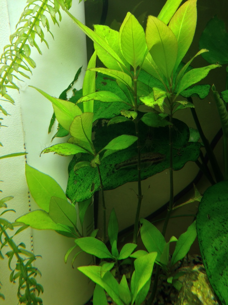 Mon 54 L planté Img_4014