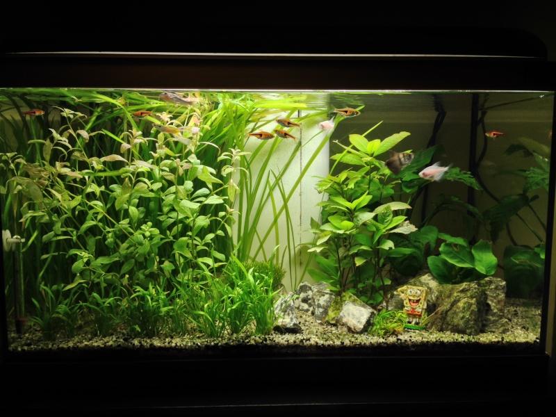 Mon 54 L planté Img_4410