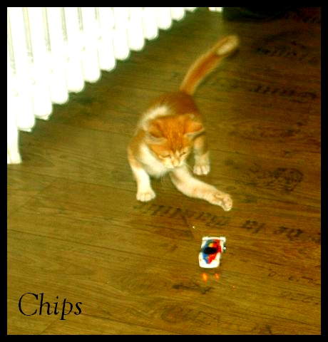 CHIPS (Ricola) - Page 2 Img_5311
