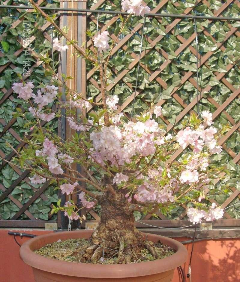 prime fioriture stagionali 03_20111
