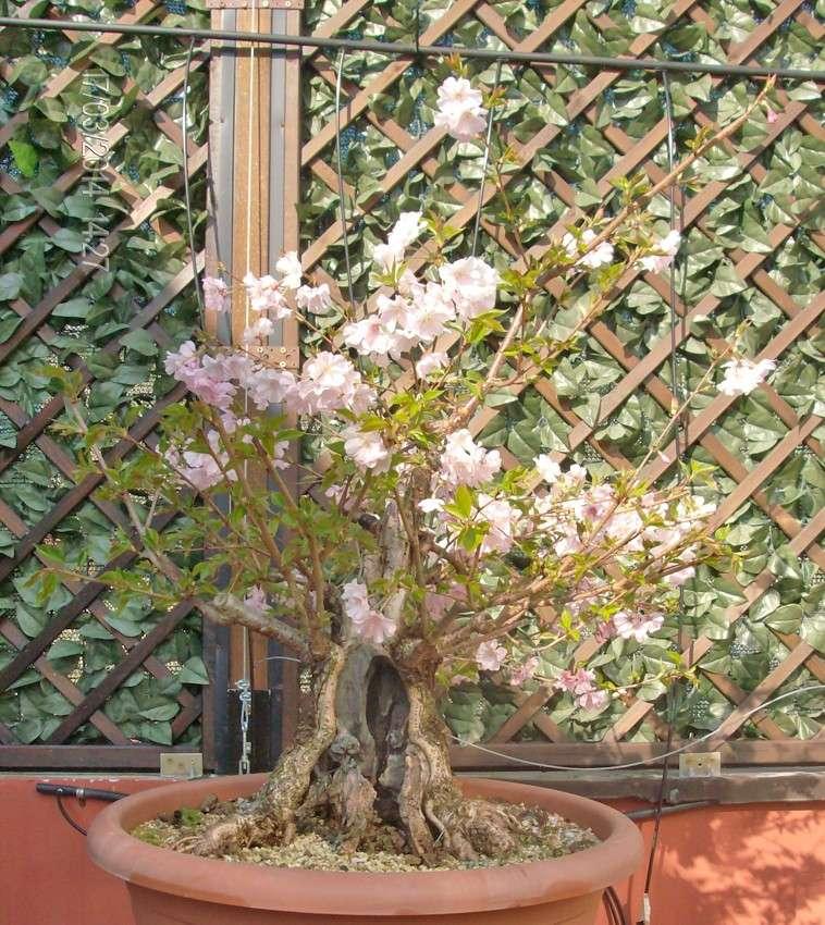 prime fioriture stagionali 03_20113