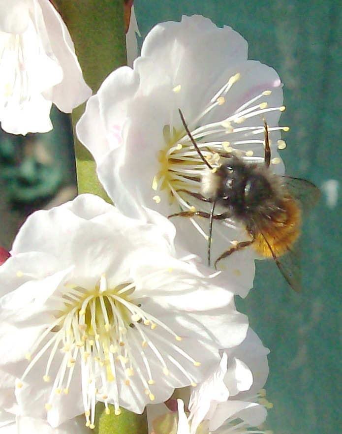 prime fioriture stagionali Immagi10