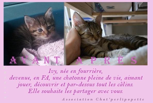 Les avants/après des chats adoptés ou en FA définitive Ivy-4111