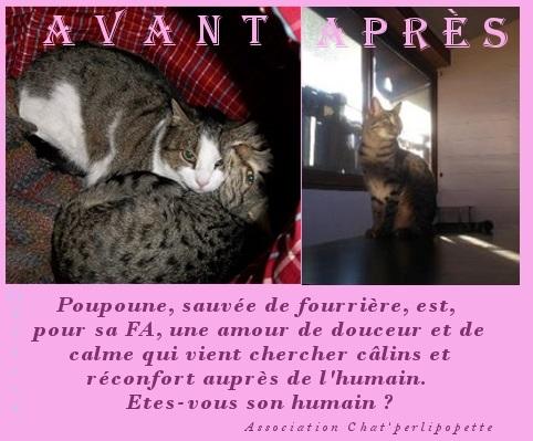 Les avants/après des chats adoptés ou en FA définitive Poupou10