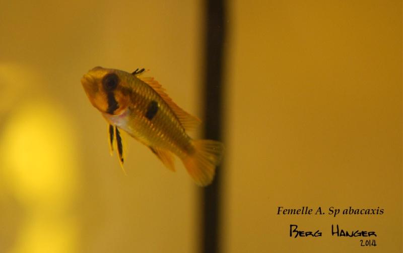 On ne s'ennuis pas en aquariophilie/ aquarium 830 litres  - Page 2 A_sp_a11
