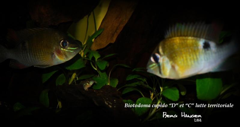 On ne s'ennuis pas en aquariophilie/ aquarium 830 litres  - Page 3 Bio410