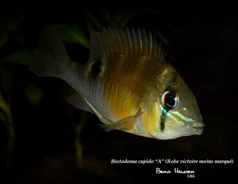 On ne s'ennuis pas en aquariophilie/ aquarium 830 litres  - Page 3 Bio510