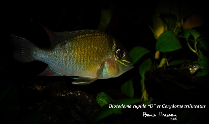 On ne s'ennuis pas en aquariophilie/ aquarium 830 litres  - Page 3 Bio710