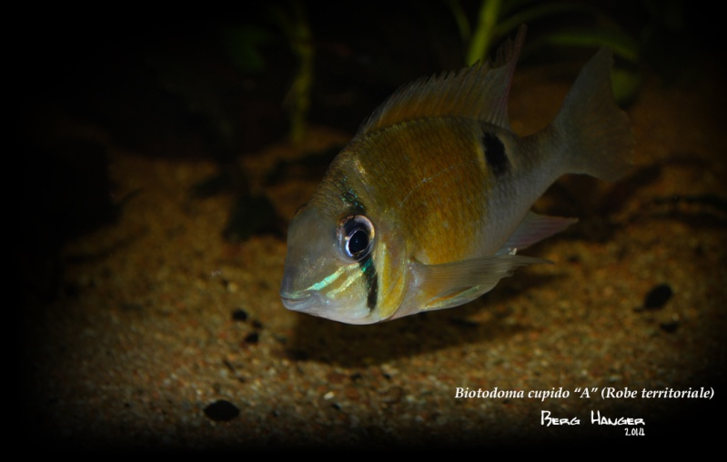 On ne s'ennuis pas en aquariophilie/ aquarium 830 litres  - Page 3 Bio810