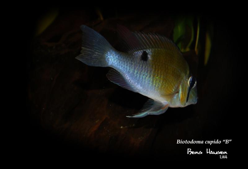 On ne s'ennuis pas en aquariophilie/ aquarium 830 litres  - Page 3 Bio910