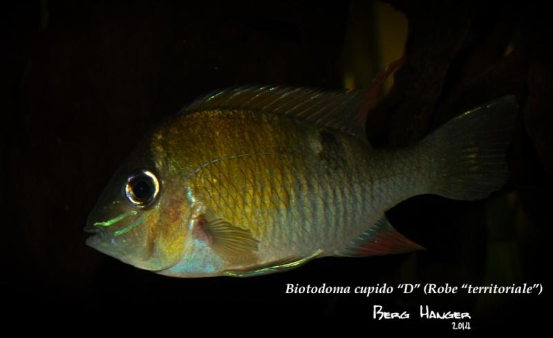On ne s'ennuis pas en aquariophilie/ aquarium 830 litres  - Page 3 Bio9a10