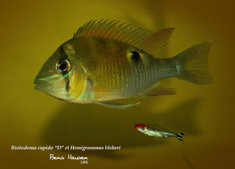On ne s'ennuis pas en aquariophilie/ aquarium 830 litres  - Page 3 Bio9b10