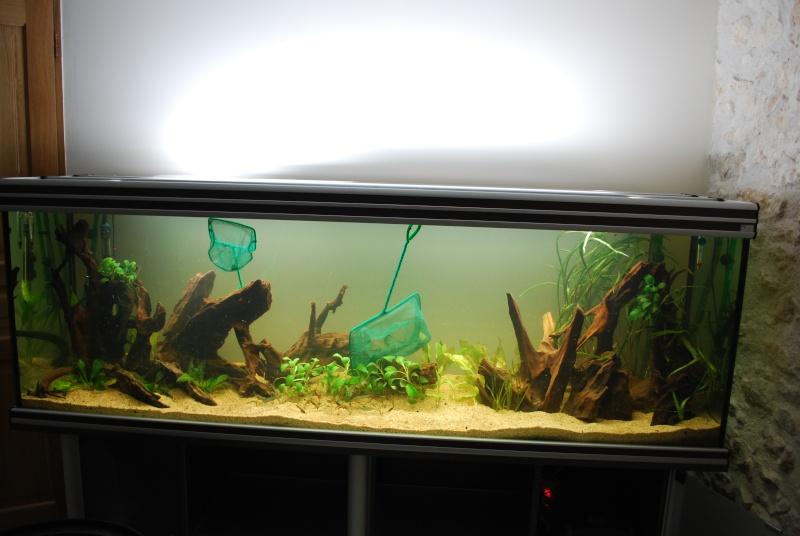 On ne s'ennuis pas en aquariophilie/ aquarium 830 litres  Dsc_0310