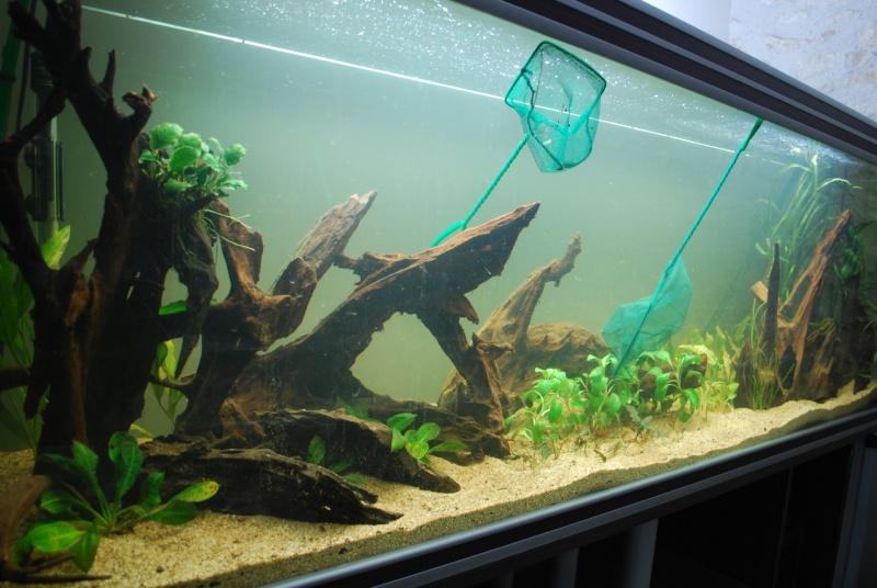 On ne s'ennuis pas en aquariophilie/ aquarium 830 litres  Dsc_0311