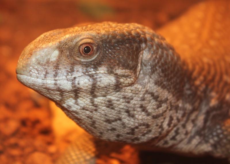 présentation de mes reptiles  Img_7315