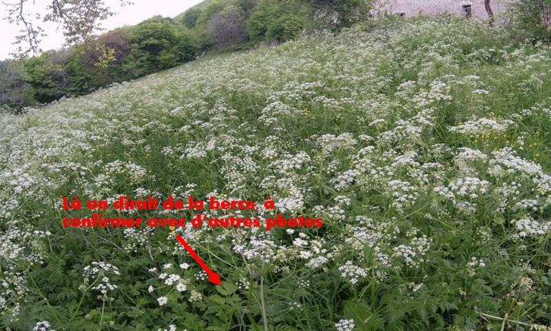 [Atelier plantes sauvages ] Aide à l'identification des plantes Image112