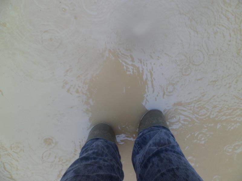 Alerte à la crue de la Garonne -  Inondation - Page 2 Sam_3010