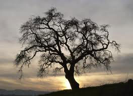Alberi…Energia vitale per l'uomo!!! 20121013