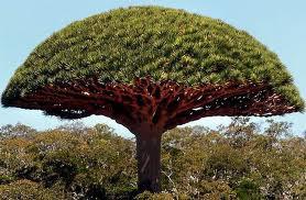 Alberi…Energia vitale per l'uomo!!! 20121021