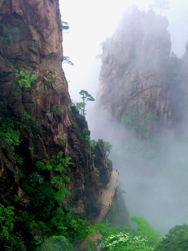 Alberi…Energia vitale per l'uomo!!! 20121026