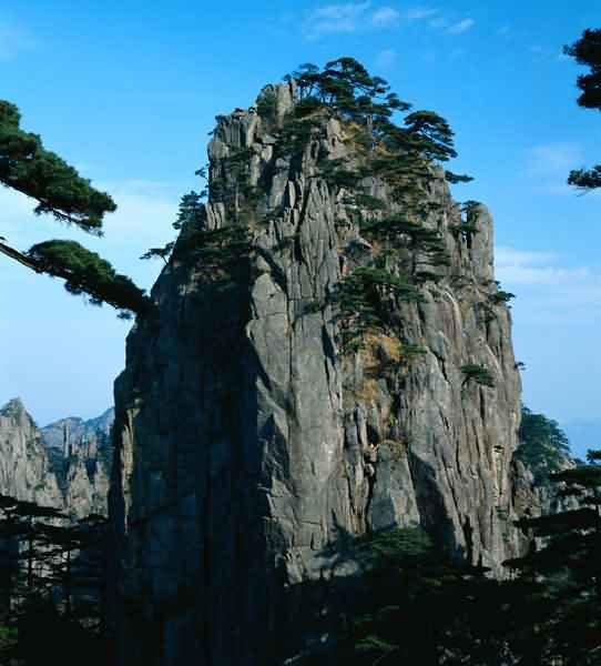 Alberi…Energia vitale per l'uomo!!! 20121028
