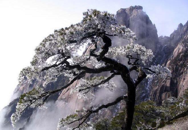 Alberi…Energia vitale per l'uomo!!! 20121032