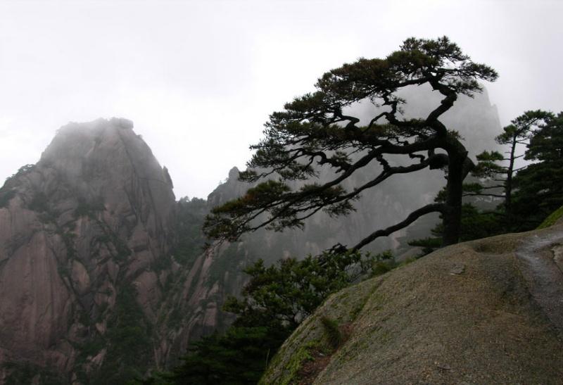 Alberi…Energia vitale per l'uomo!!! 20121034