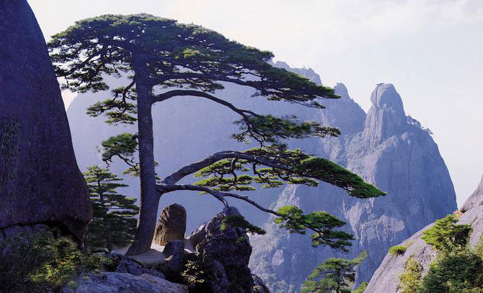 Alberi…Energia vitale per l'uomo!!! 20121035