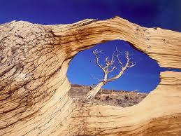 Alberi…Energia vitale per l'uomo!!! 20121037