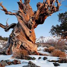 Alberi…Energia vitale per l'uomo!!! 20121039