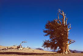 Alberi…Energia vitale per l'uomo!!! 20121040