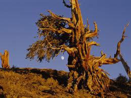 Alberi…Energia vitale per l'uomo!!! 20121041