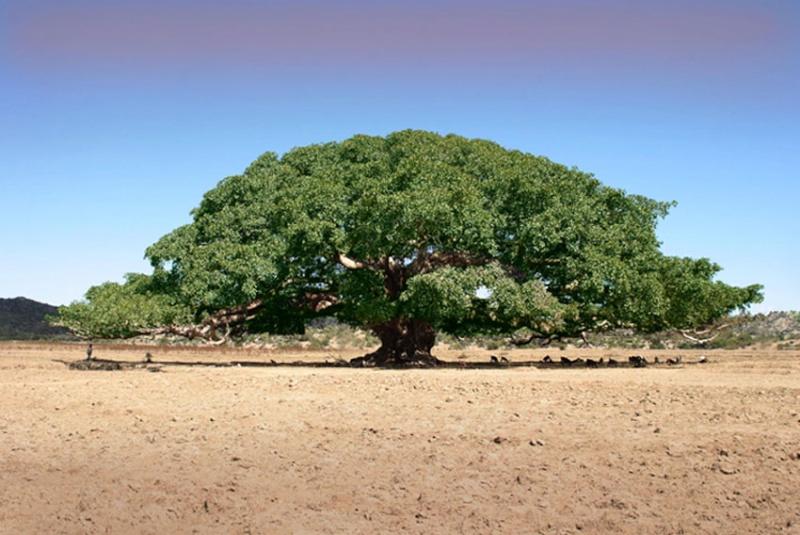 Alberi…Energia vitale per l'uomo!!! 20121045