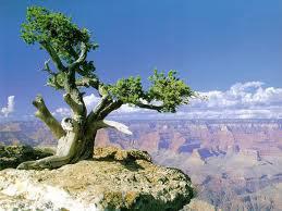 Alberi…Energia vitale per l'uomo!!! 20121047