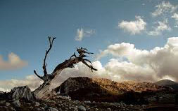 Alberi…Energia vitale per l'uomo!!! 20121048