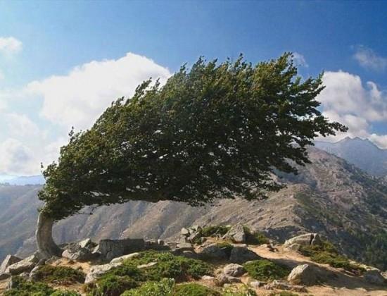 Alberi…Energia vitale per l'uomo!!! 20121051