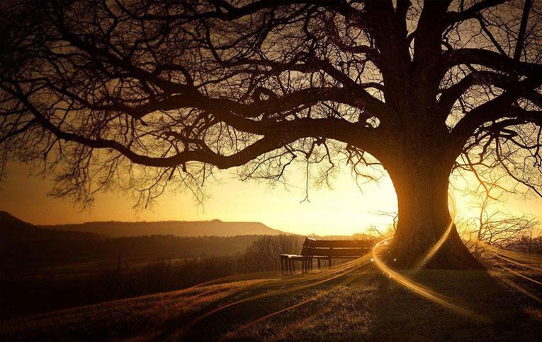 Alberi…Energia vitale per l'uomo!!! 20121060