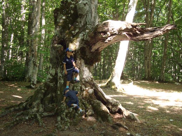 Alberi…Energia vitale per l'uomo!!! 20121062
