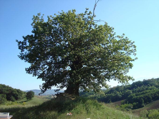 Alberi…Energia vitale per l'uomo!!! 20121065