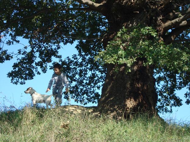 Alberi…Energia vitale per l'uomo!!! 20121066