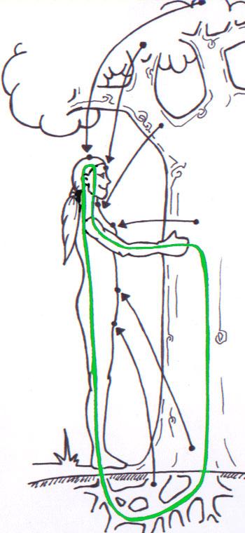 Alberi…Energia vitale per l'uomo!!! Abbrac10